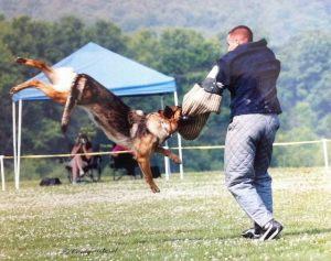 dog-protection01