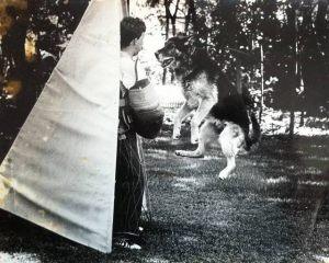 dog-protection04