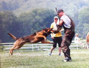 dog-protection05
