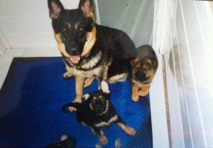 dog-protection10