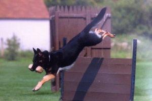 dog-protection13