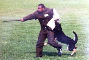 dog-protection14