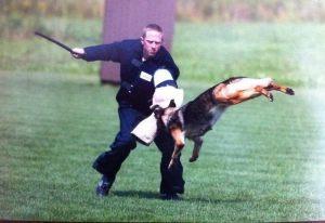 dog-protection15