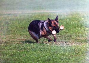 dog-protection16