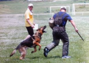 dog-protection17