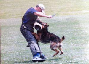 dog-protection20