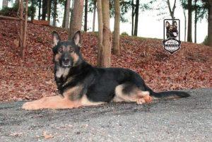 dog-training03