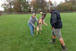 dog-training10