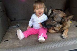 dog-training11