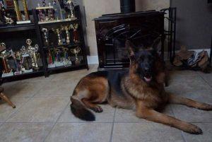 dog-training14