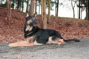 dog-training7