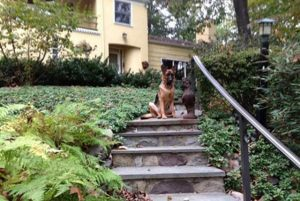 dog-training8