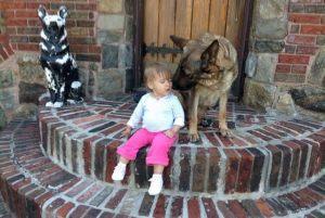 dog-training9