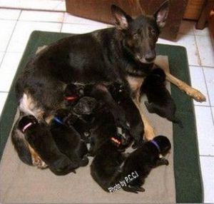 dog-protection-training02