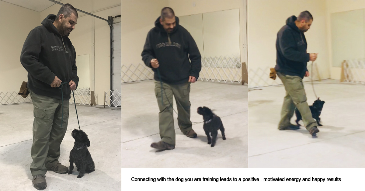 Companion And Protection Dog Tips Frenchtown Nj Pro Canine Center