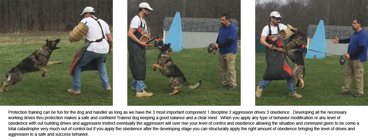 Protection Training at Pro Canine Center
