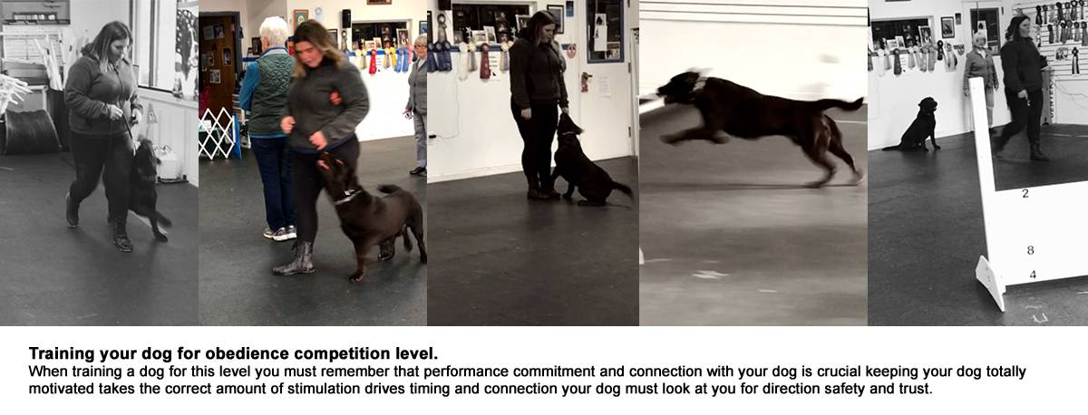 training-obedience-competition